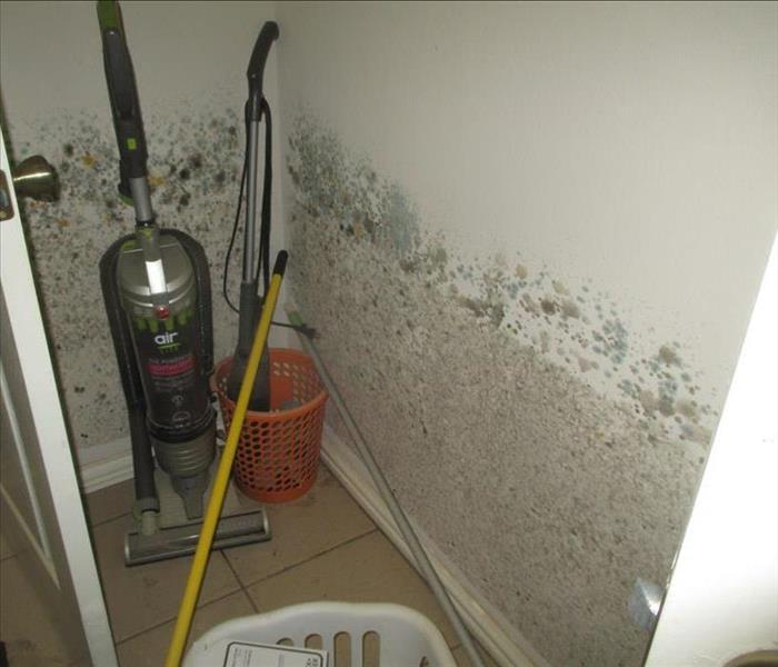 Mold Remediation Quickly Identifying And Remediation Mold in Your Home